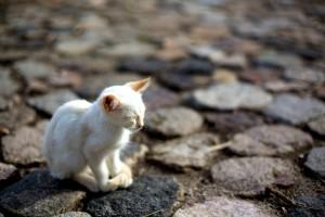 Blind Cat Alone